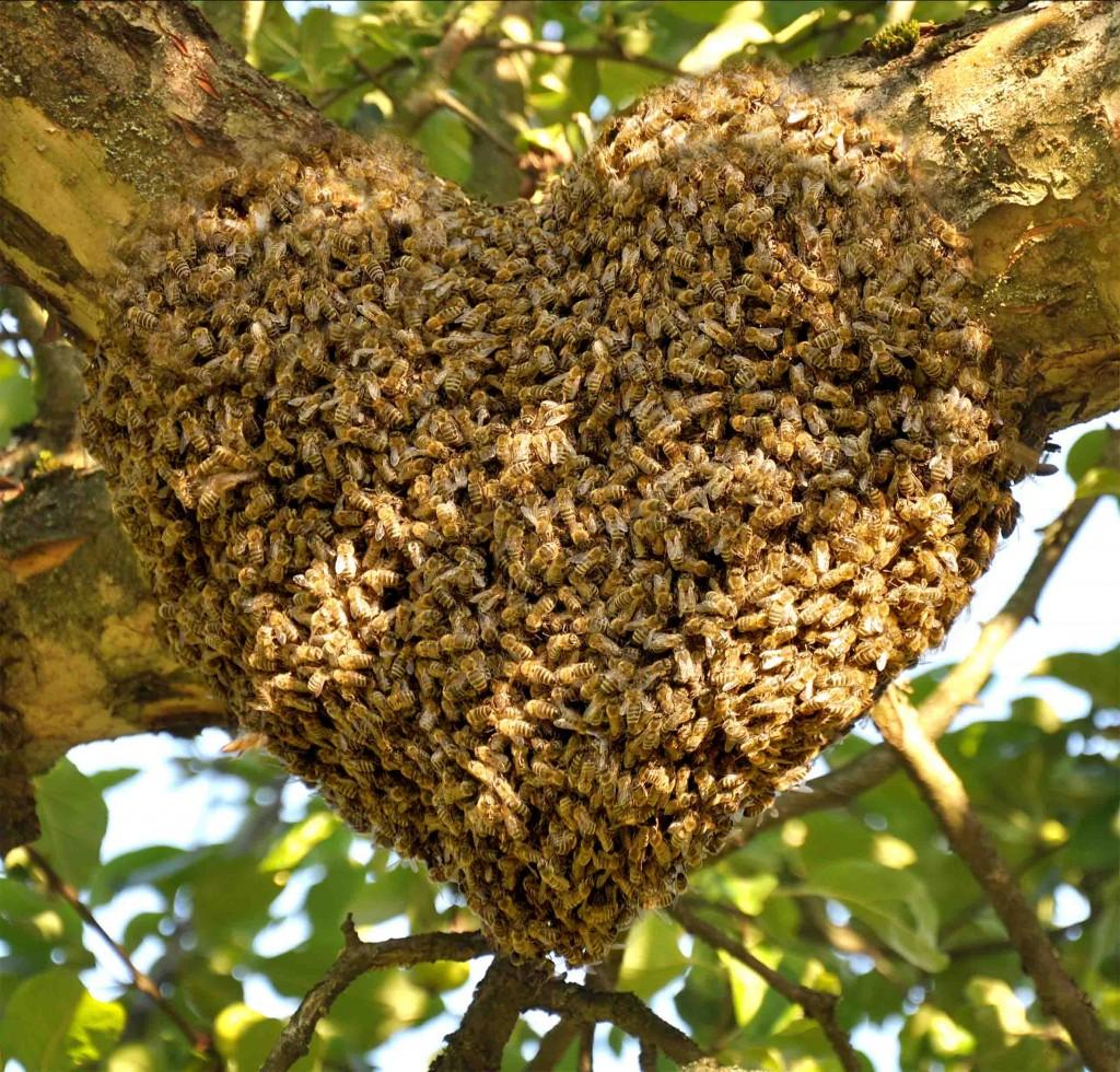 Bienenherz